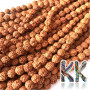 Beads made of rudraksha tree nuts with a diameter of 7 mm and a hole for a thread with a diameter of 0.5-1 mm. These are called 5 mukhi rudraksha beads. The beads come from India and may differ by up to 0.8 mm from the stated size due to manual sorting. The beads are stained with an extract of root vegetable dyes, which has traditionally been used in India to protect beads for hundreds of years.THE PRICE IS FOR 1 PCS.