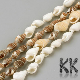 Natural shell beads - 8-18 x 5-10 x 5-10 mm