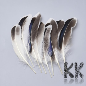Two-colored goose feathers - 115 - 160 x 20 - 35 mm